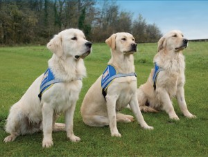 3 Chiens guide